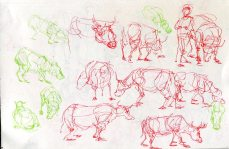 summer_animals007